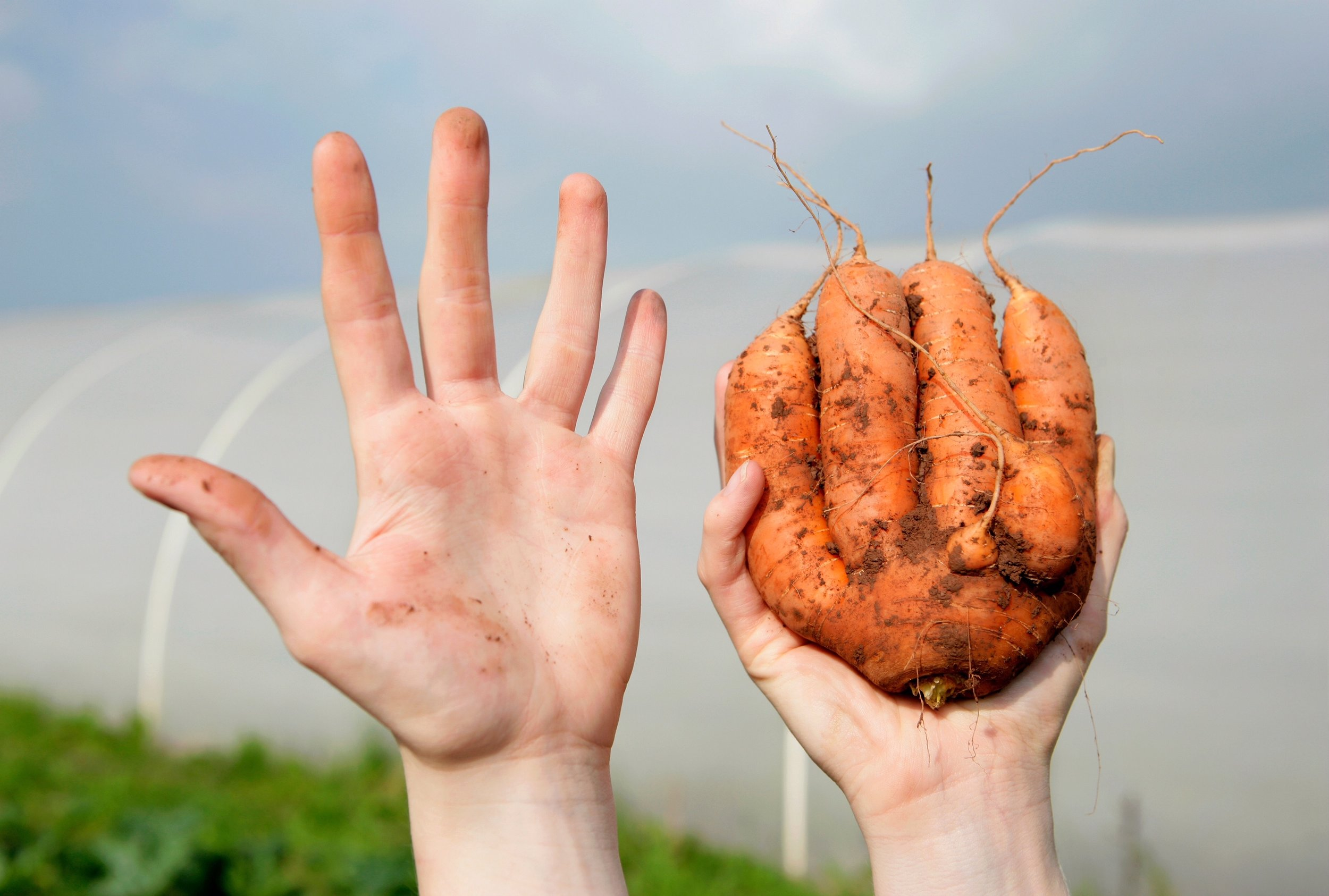 hand and odd carrot shutterstock_740216671.jpg