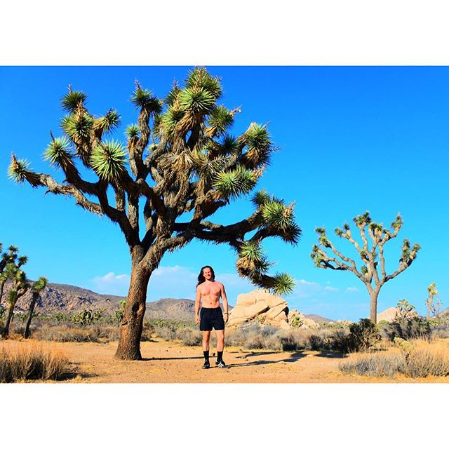 """4. Malibu ➡️ Los Angeles ↘️ Joshua Tree National Park """"Things will go as they will; and there is no need to hurry to meet them"""""""