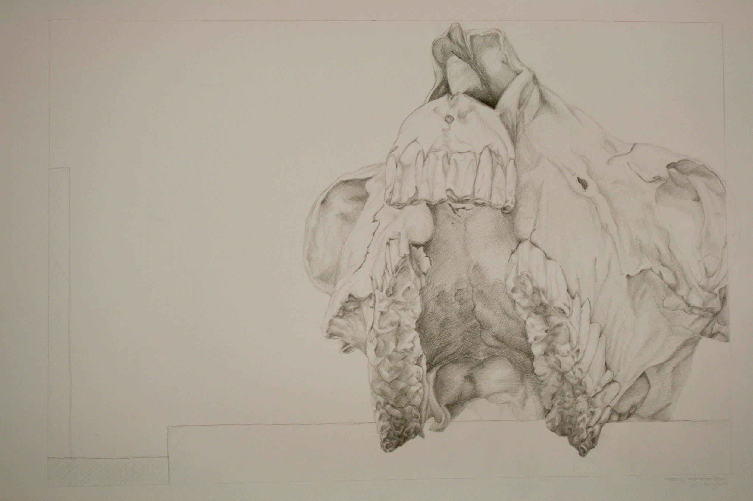 HorseSkull1.jpg