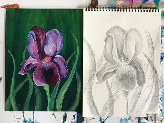 All the irises for class today! ✏️🖌