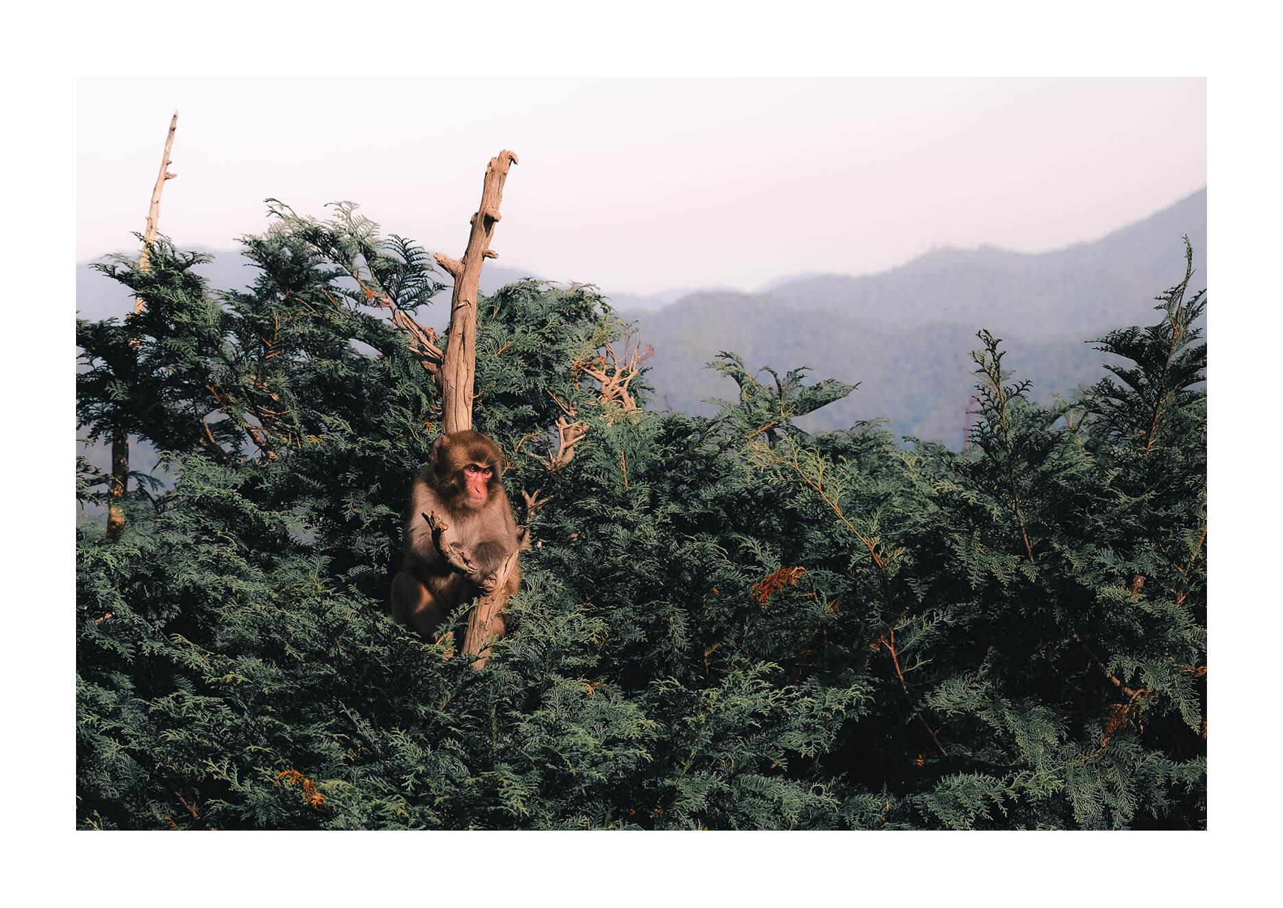 jc-monkeypark07.jpg