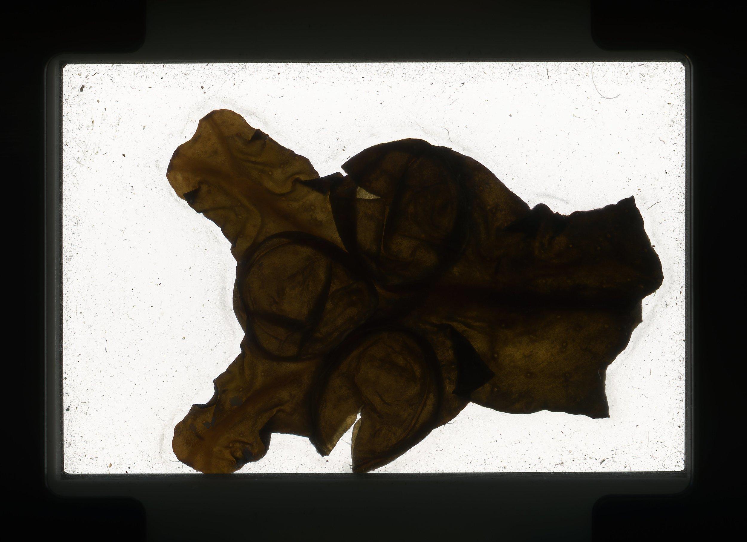 norway.13.pf.seaweed.jpg