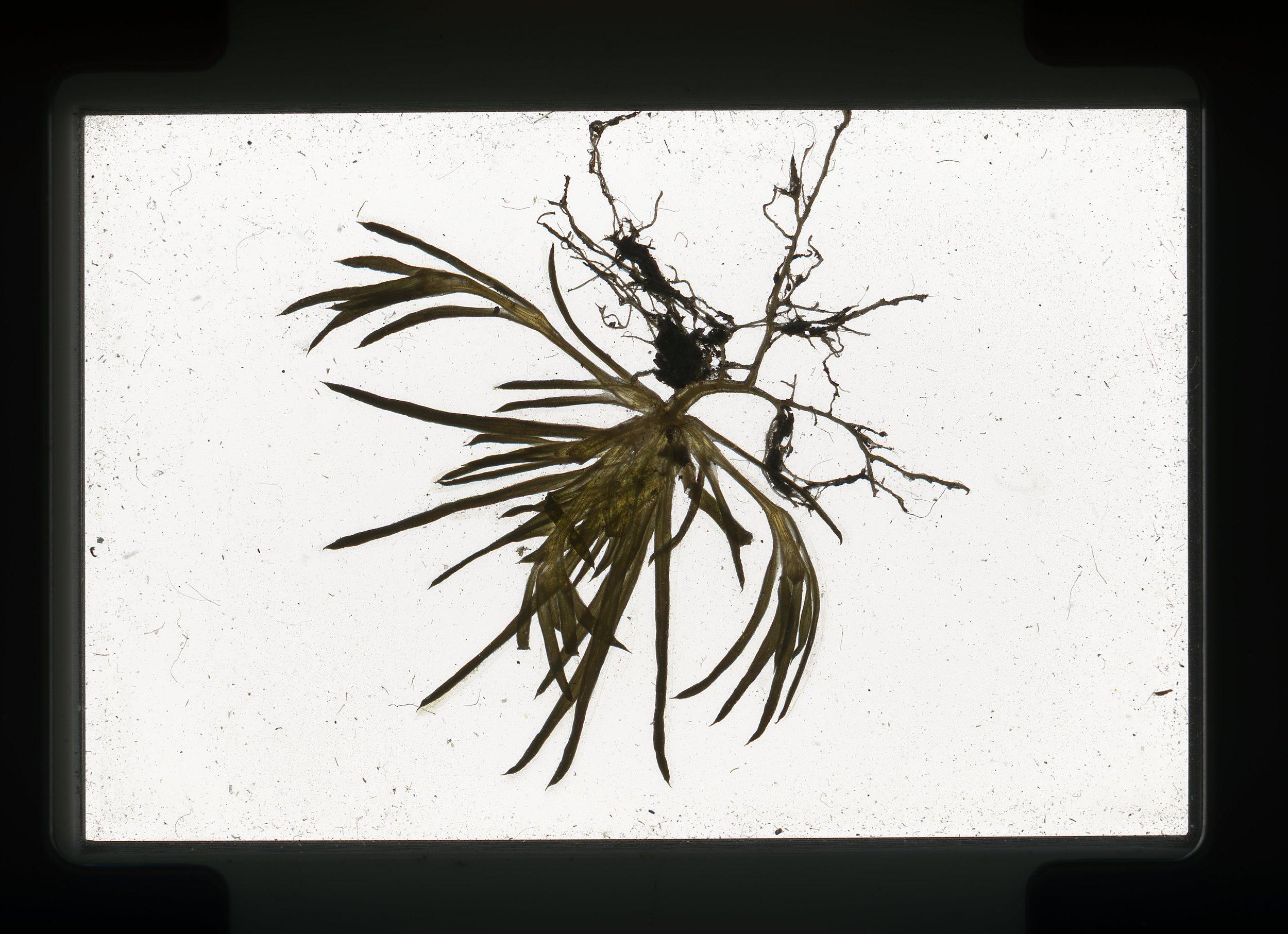 norway.17.pf.smallplant.jpg
