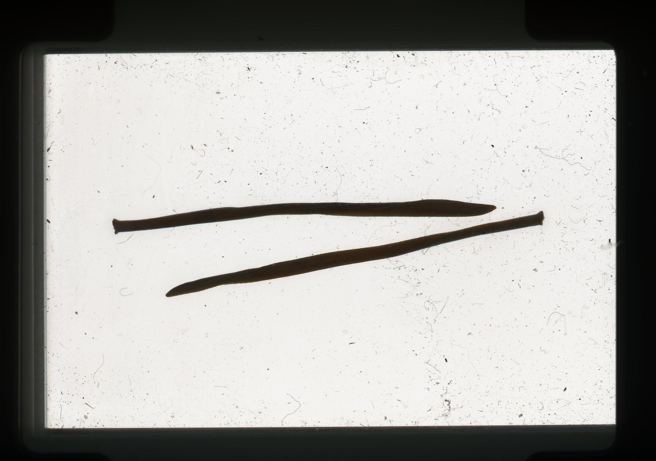 norway.22.pf.pineneedles.jpg