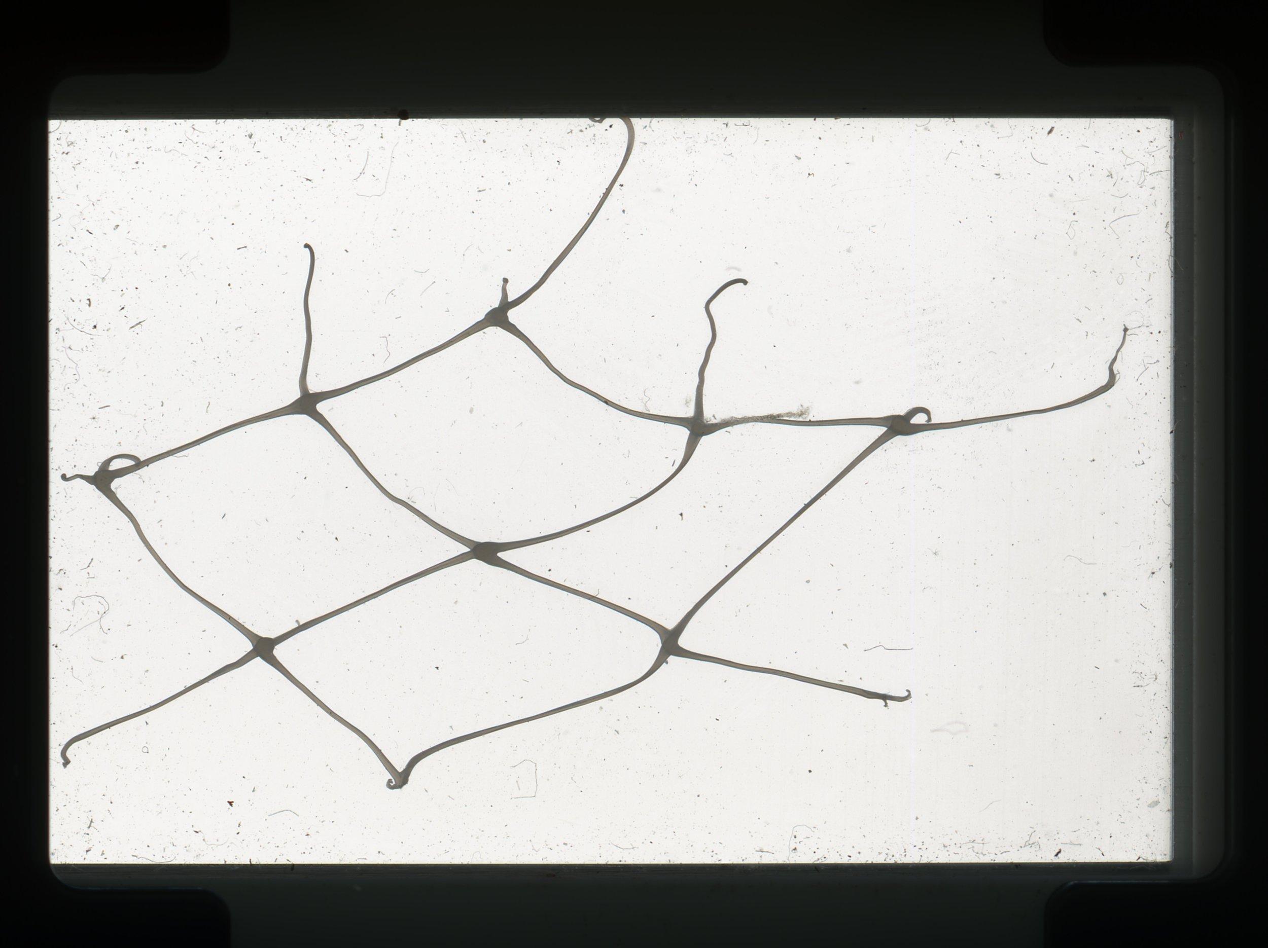 norway.30.pf.fishnet.jpg