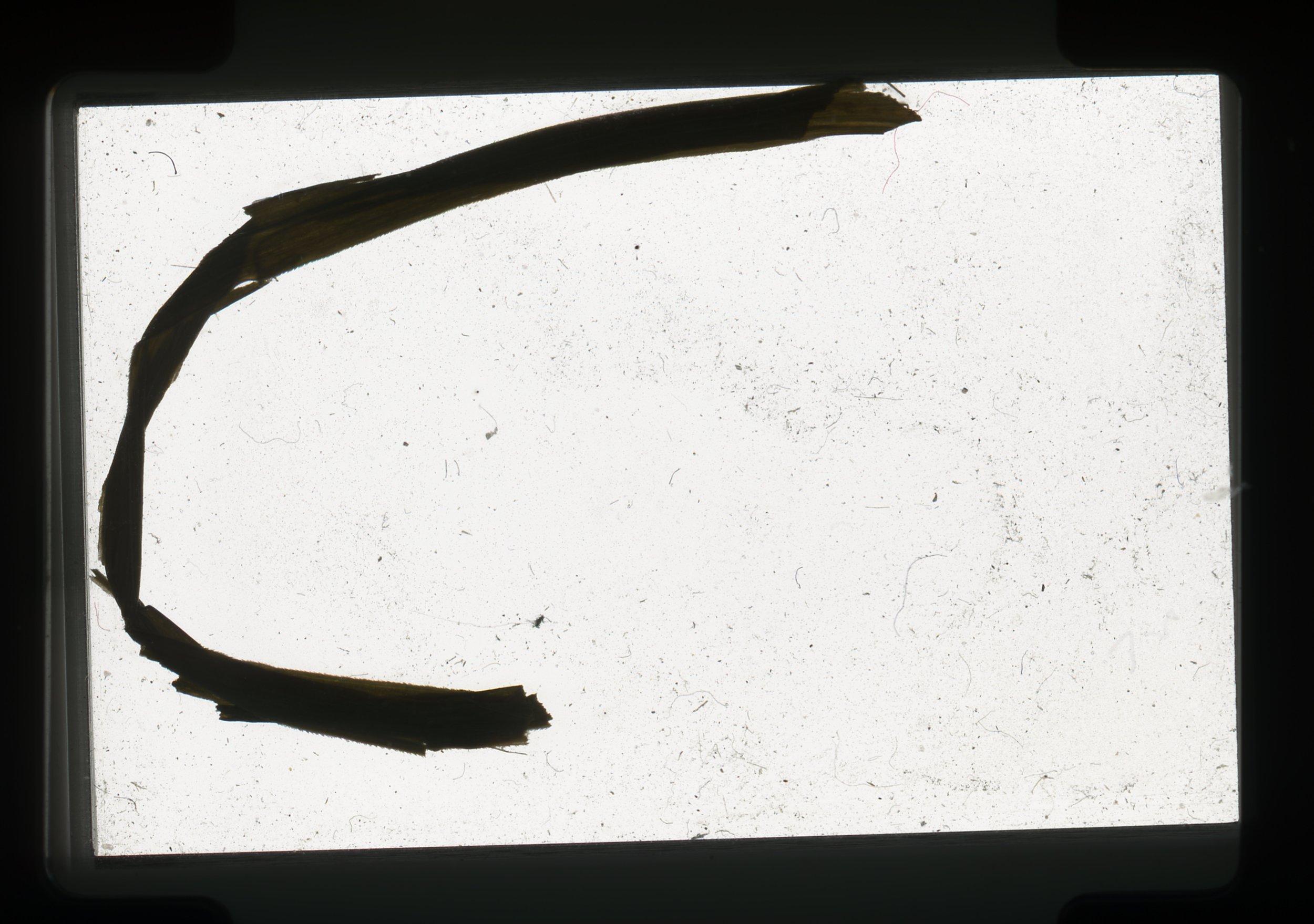 norway.36.pf.grassbladejpg.jpg