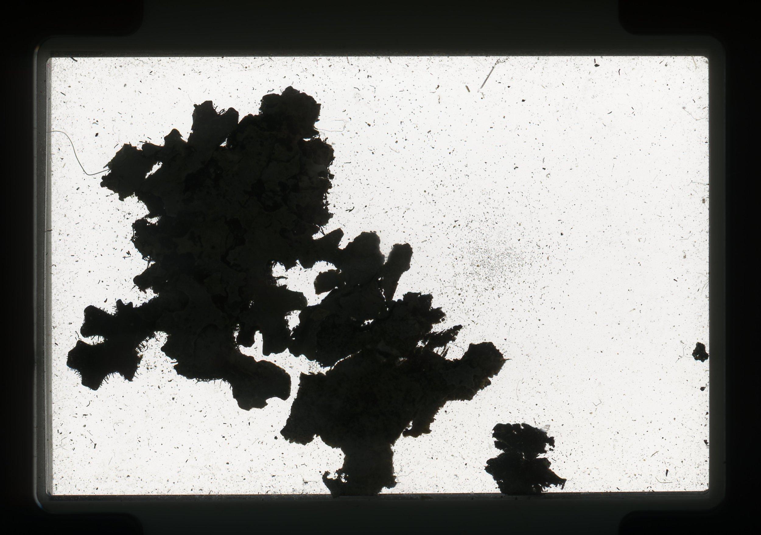 norway.43.pf.lichen.jpg