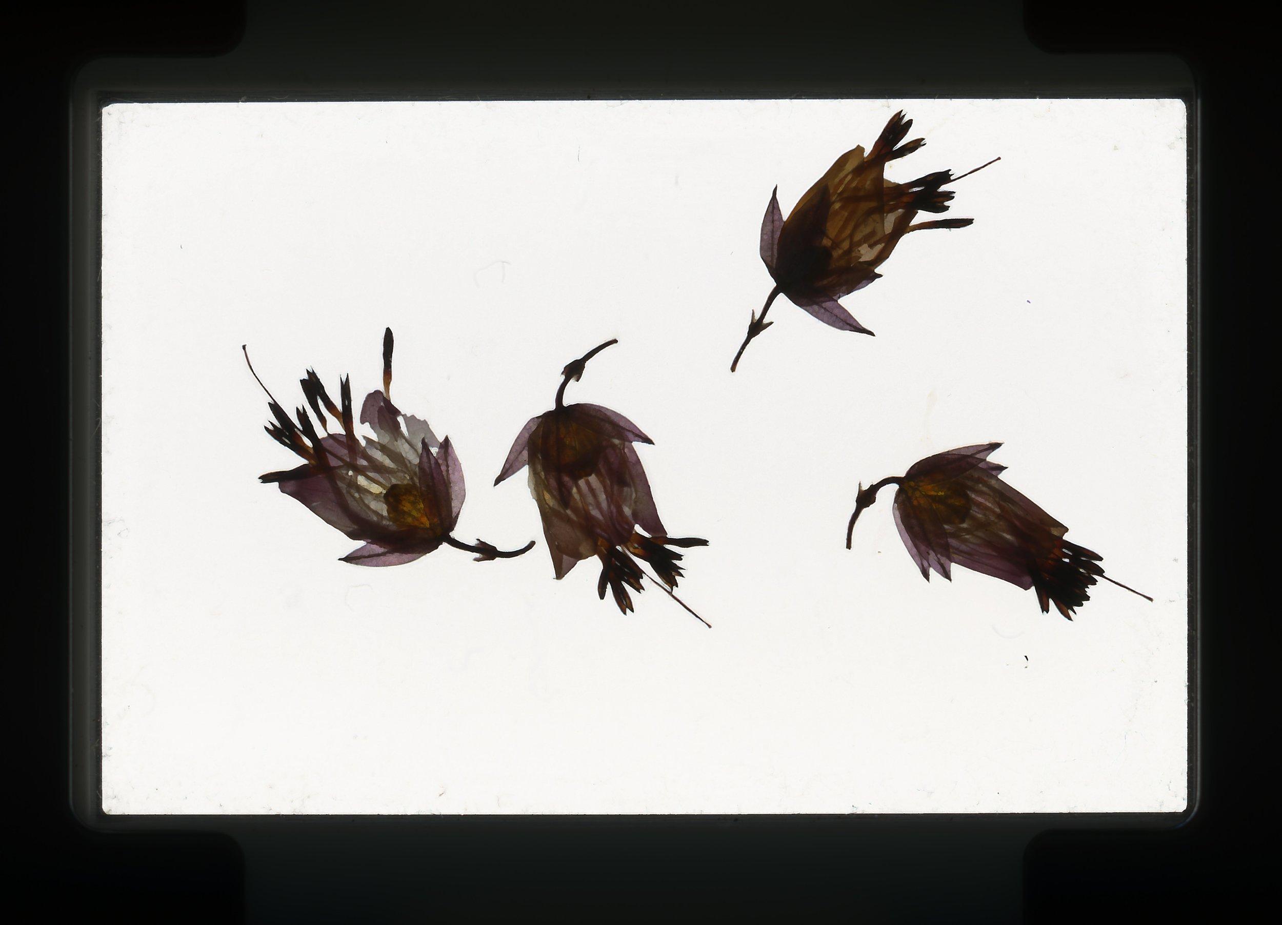 norway.50.pf.purpleflowers.jpg
