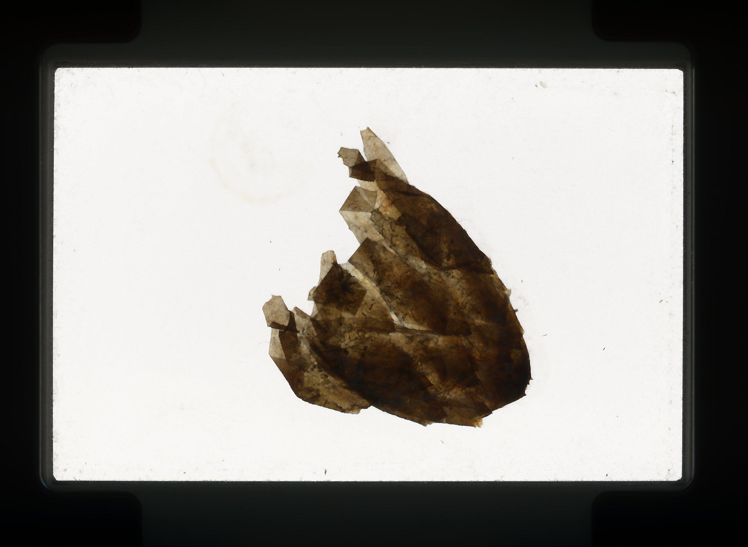 norway.53.pf.pineconehusk.jpg