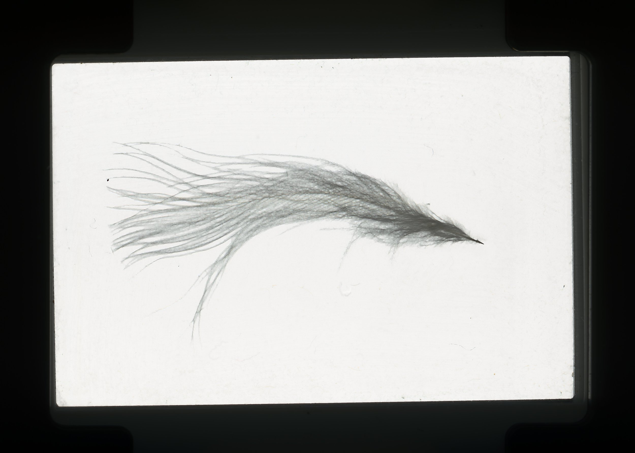 norway.54.pf.feather.jpg