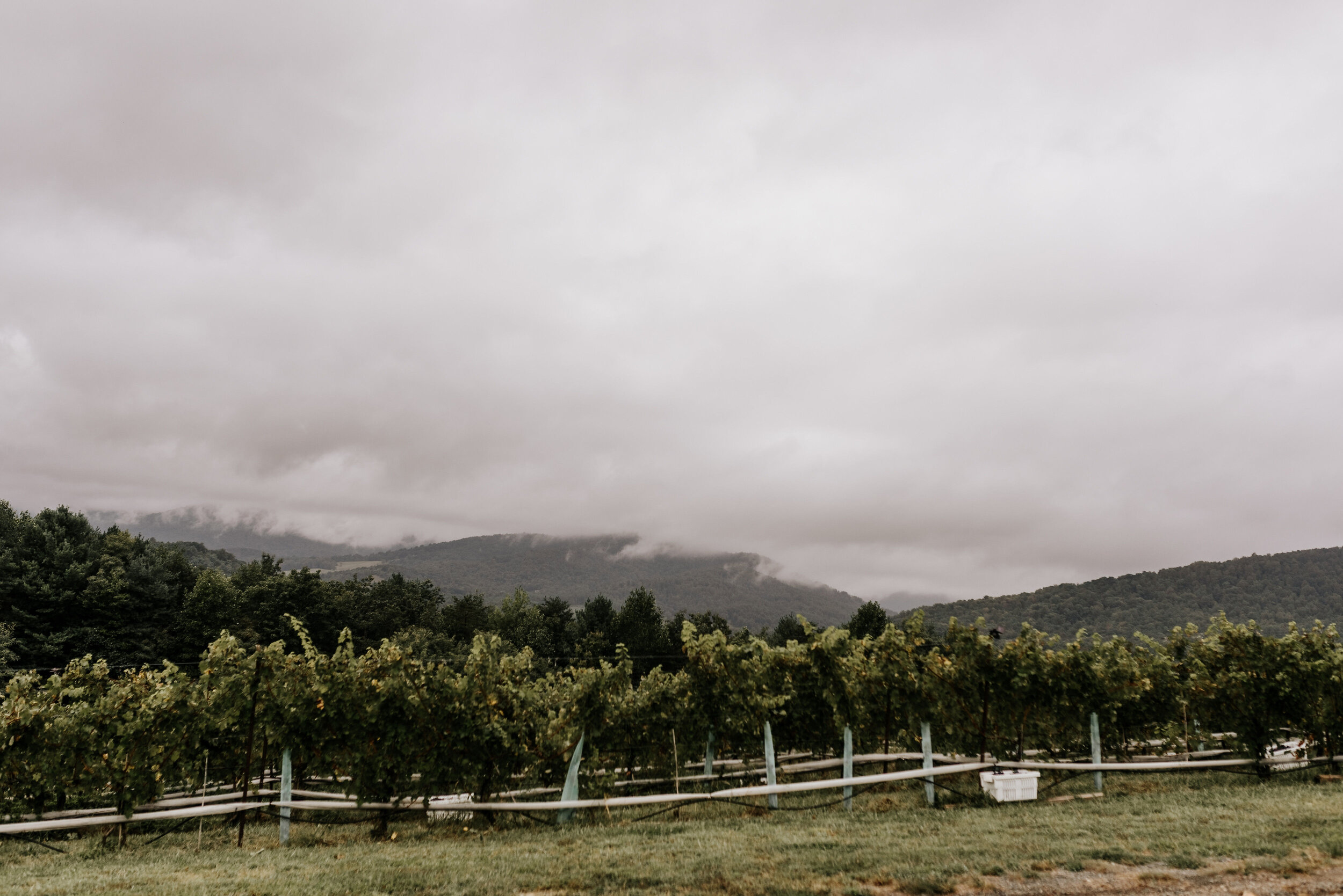 Allison_Nolan_Moss_Vineyards_Wedding_Charlottesville_Virginia_Photography_by_V_1.jpg