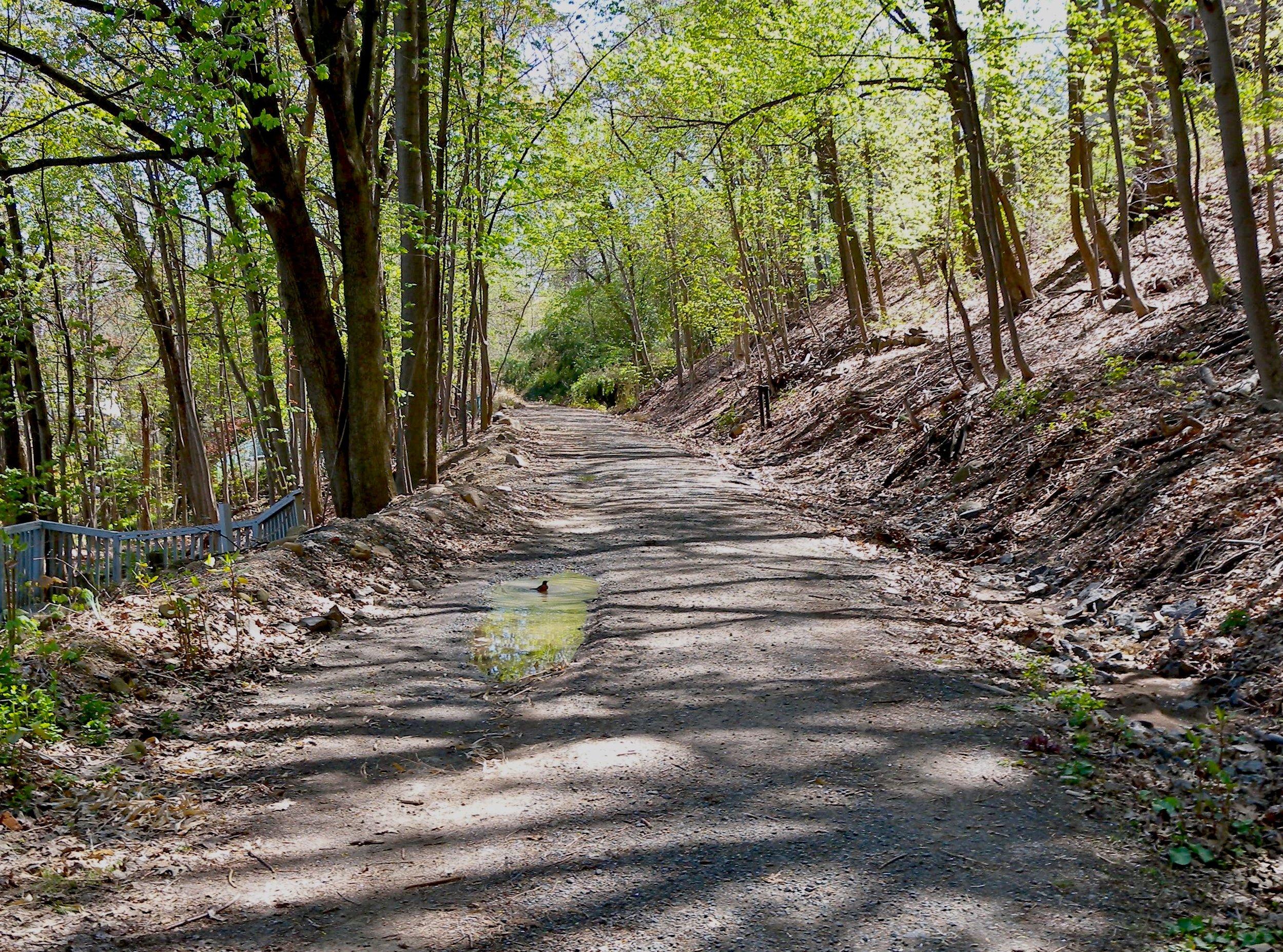 rail trail 2.jpg
