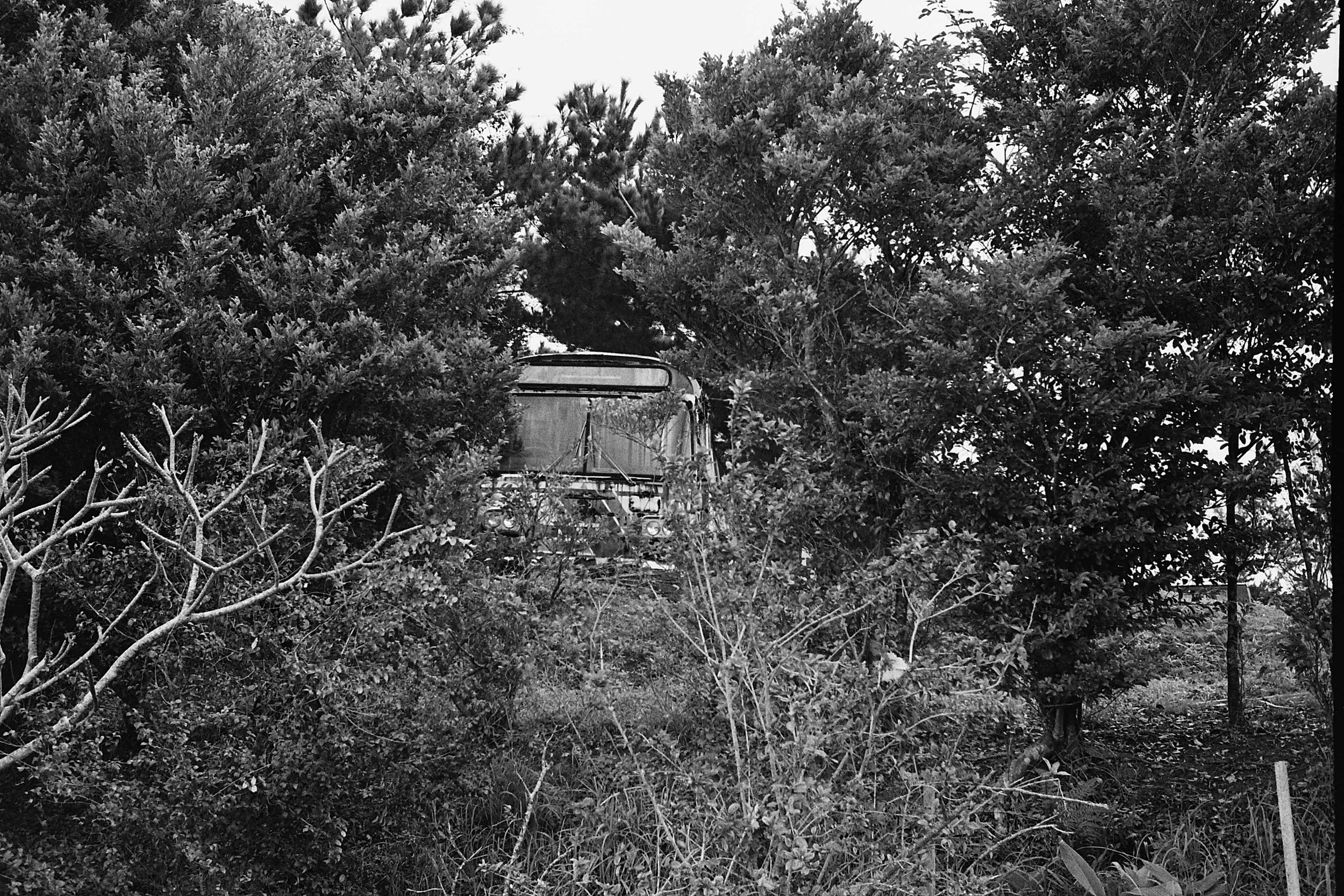 Leica M6 Summicron/35mm  Yes that's a bus peaking through the trees...