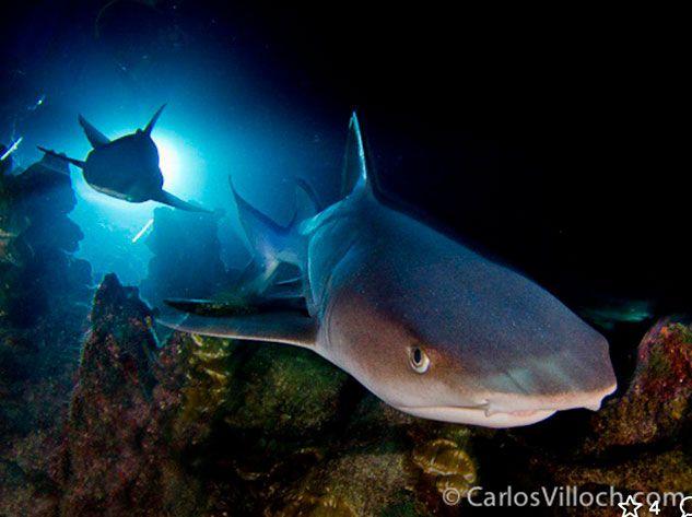 carlos-villoch-fotografia-submarina.jpg