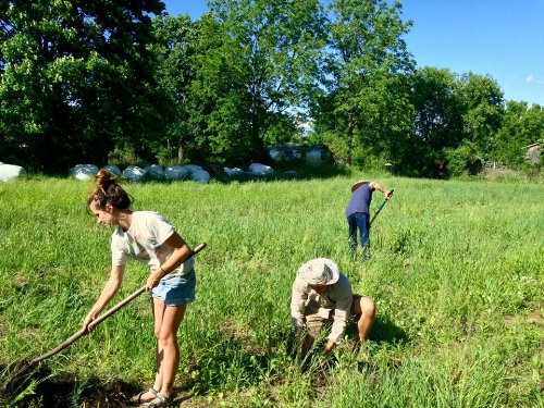 We moved to the Trumansburg area on June 1st, 2016. Our portion of the field was rhizomatous and challenging, however with copious amounts of rotting silage bales, which we used for mulch, we managed to plant about 200 tomato plants. This is the beginning.
