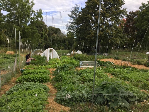 Us in the garden, tending the pepper plants. You can also see our cattle panel greenhouse, which was inspired by our friend Sean. September 2017