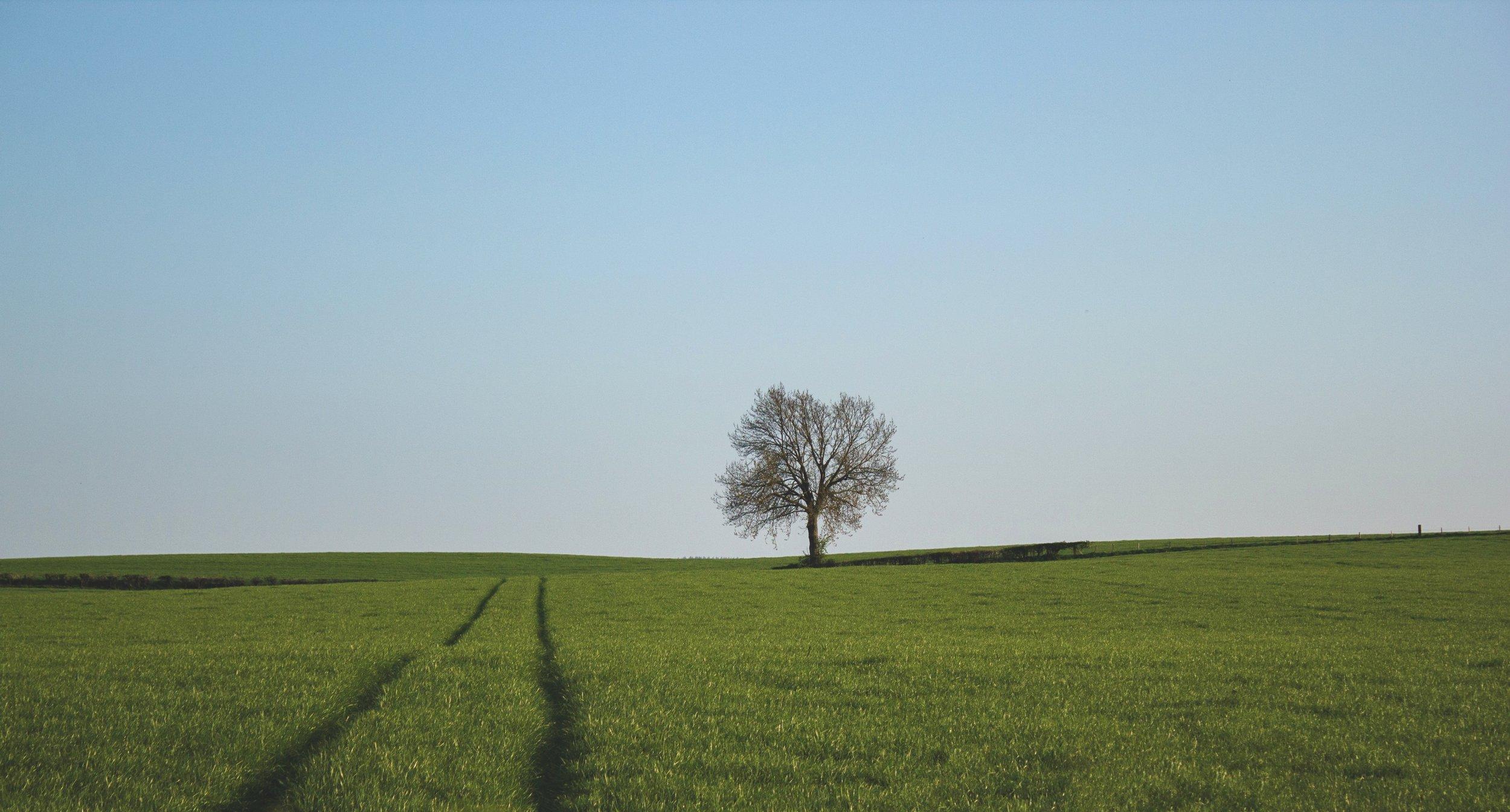 The johnsamuelgray egoless tree.