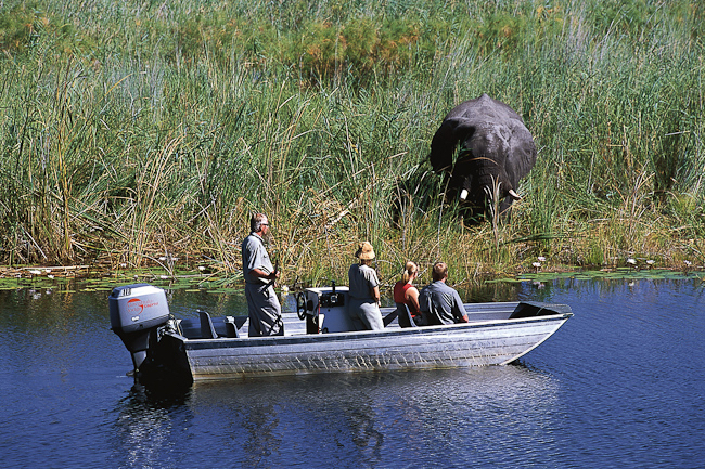 africa_photo_picture_safari_botswana