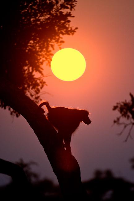 africa photographic safari Botswana