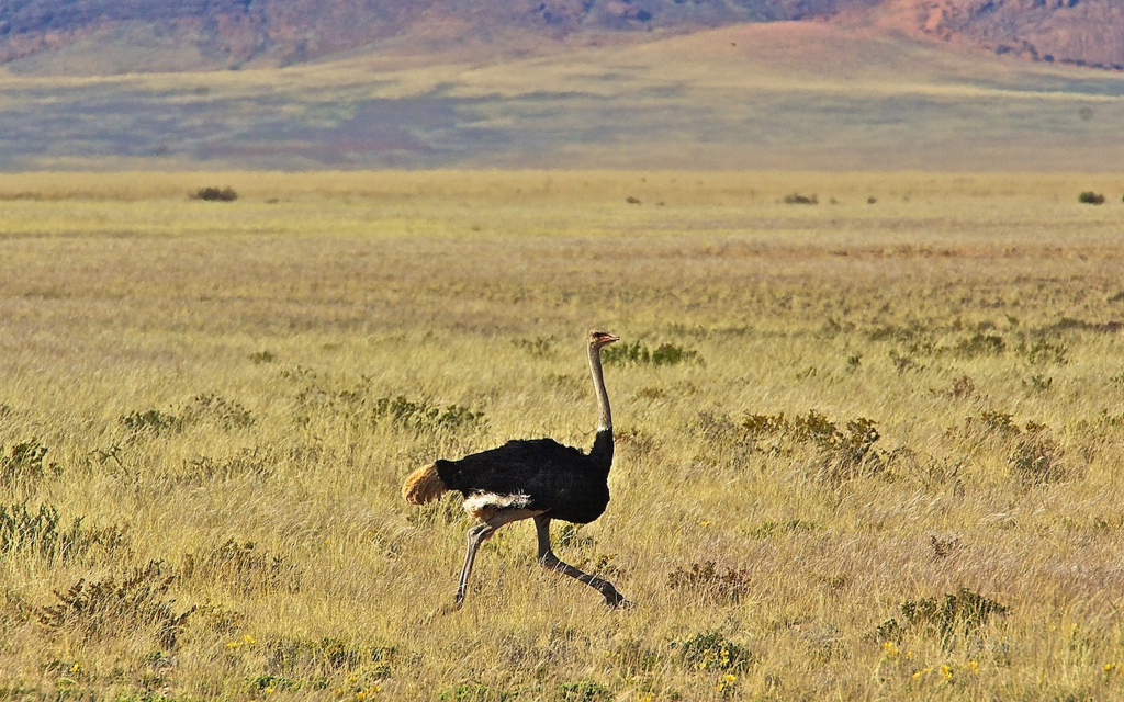 Africa_Photographic_Namibia__72.jpg