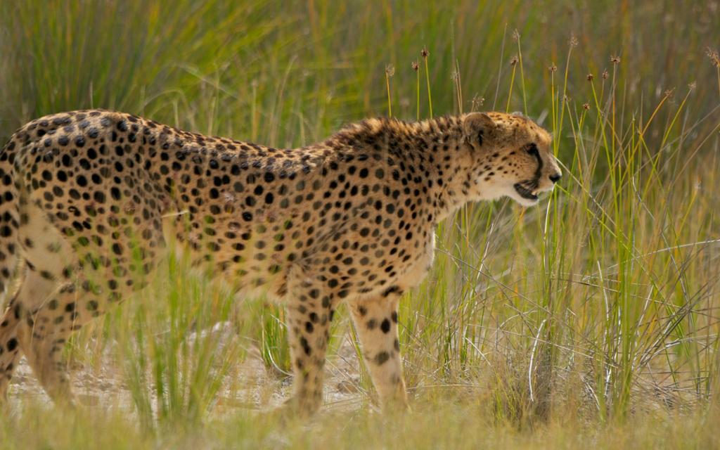 Africa_Photographic_Namibia__80.jpg