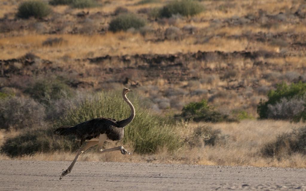 Africa_Photographic_Namibia__83.jpg