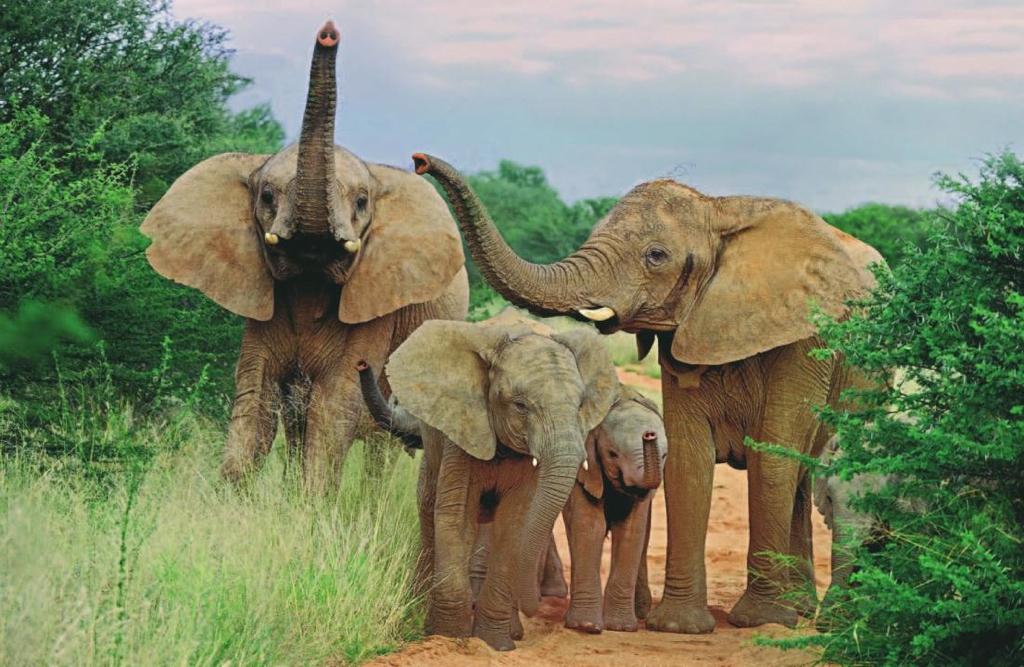 Africa_Photographic_Namibia__98.jpg