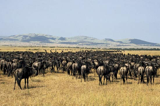 Africa_Photographic_Serengeti__4.jpg