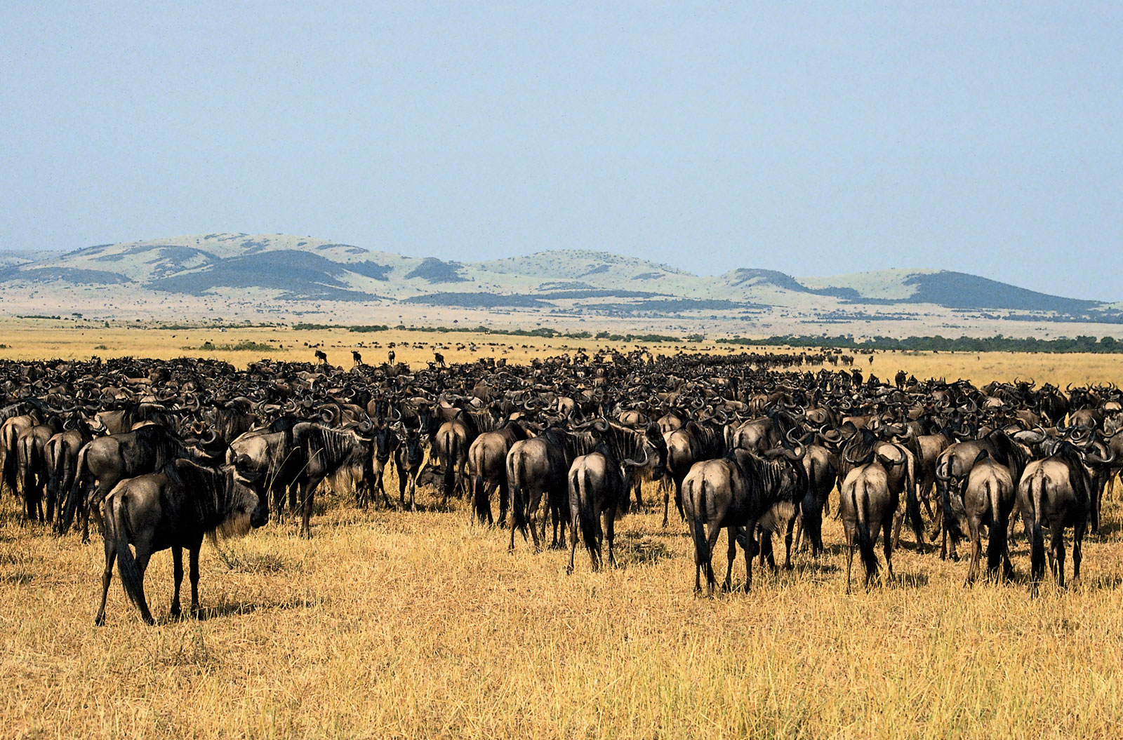 Africa_Photographic_Serengeti__10.jpg