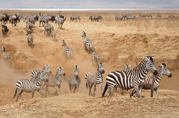 Africa_Photographic_Serengeti__11.jpg