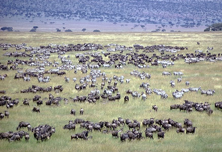 Africa_Photographic_Serengeti__41.jpg