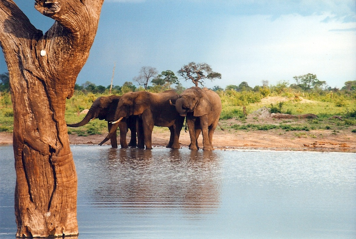 Africa_photographic_safari-Zimbabwe