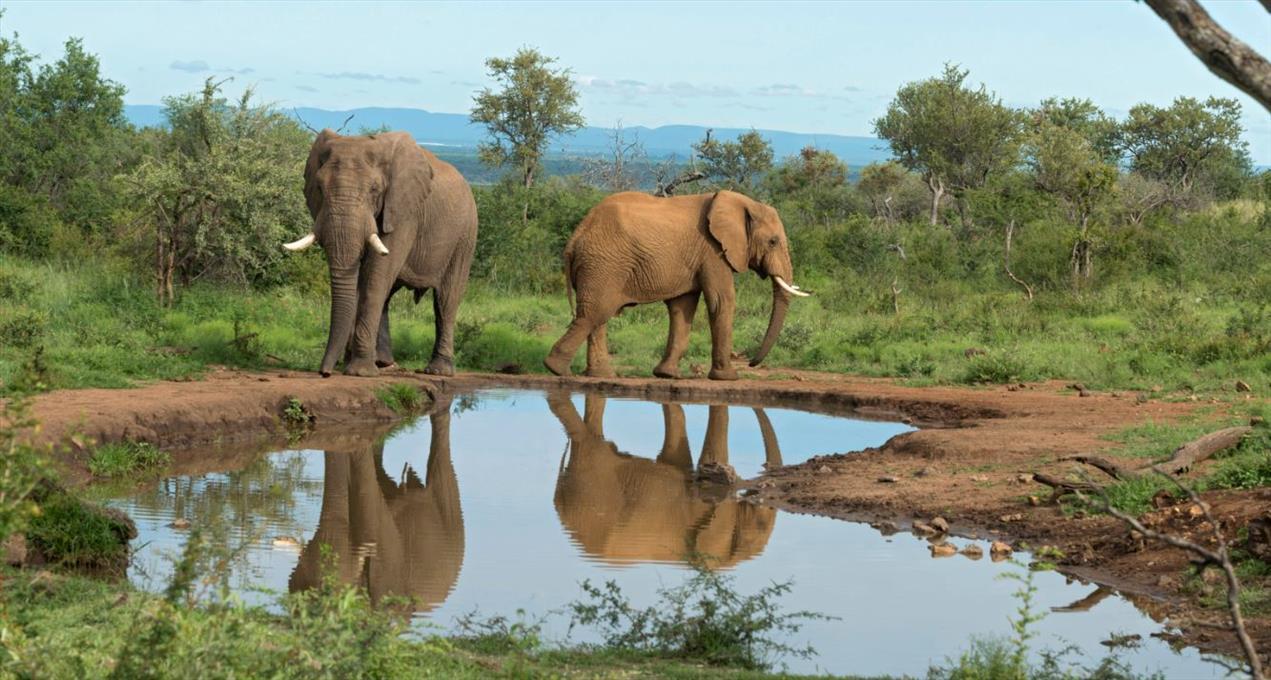 Africa photographic safari Madikwe elephant