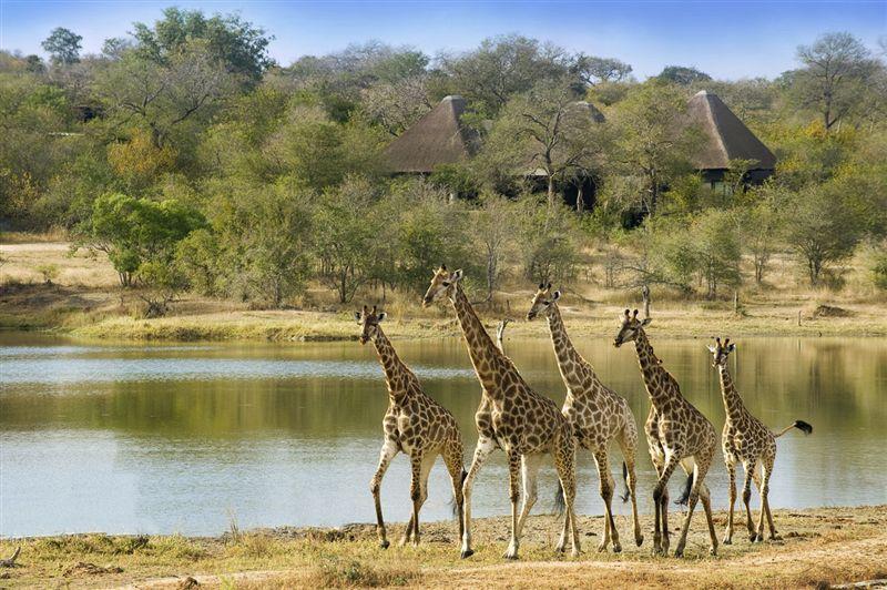 africa_photographic_safari_Kruger_Sabi