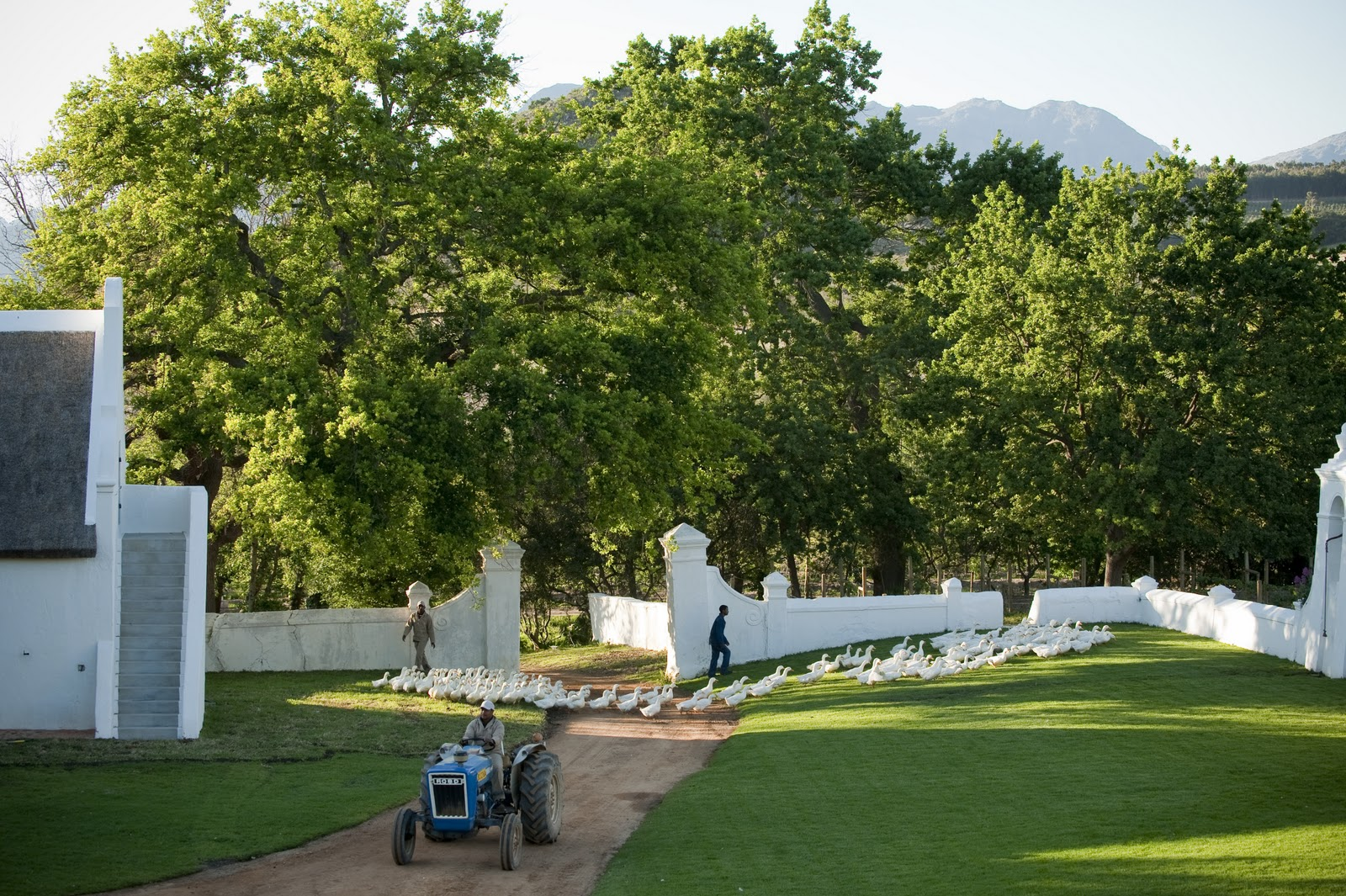 vafrica_photo_safari_South_Afrifca_Wine_Franschoek