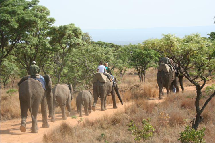africa-photo-safar1_ elephant interaction8.jpg