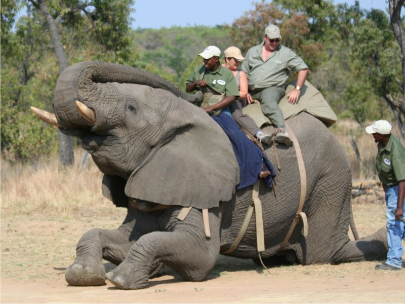 africa-photo-safar1_ elephant interaction6.jpg