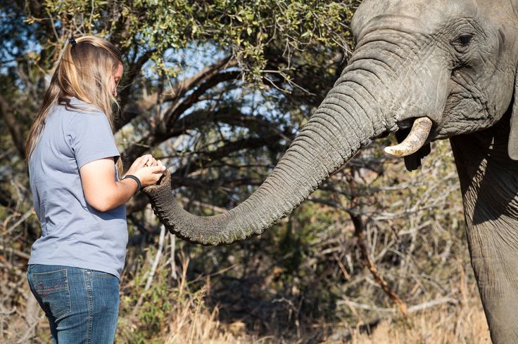 africa-photo-safar1_ elephant interaction4.jpg