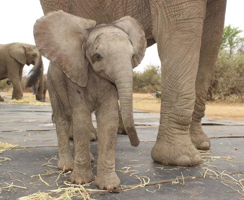 africa-photo-safar1_ elephant interaction.jpg