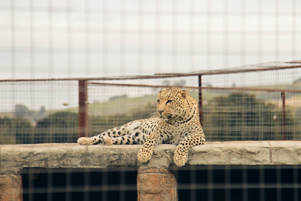 africa-photo-safari-vredenheim5.jpg