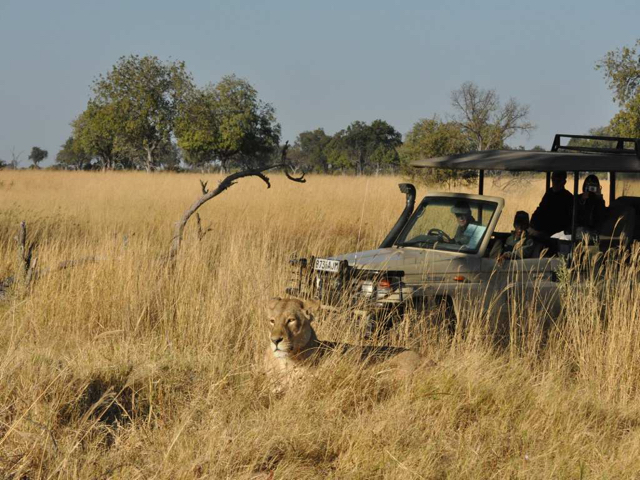 safari in africa moremi17.jpg