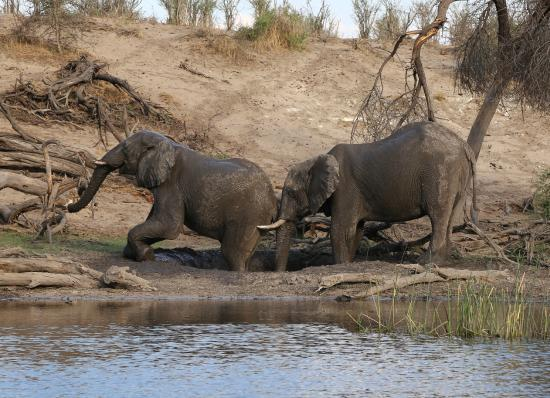 safari in africa makgadikgadi acc 7fa.jpg