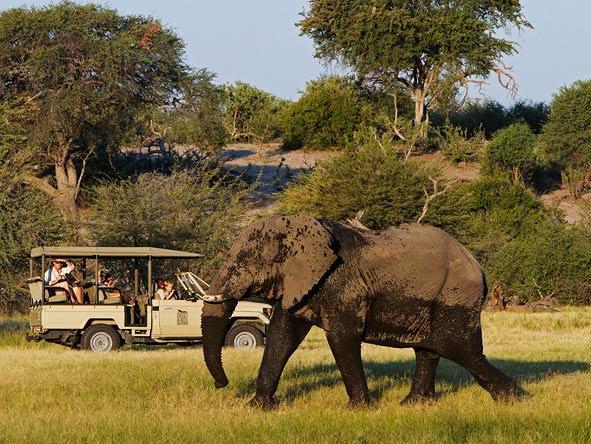 safari in africa makgadikgadi acc 2.jpg