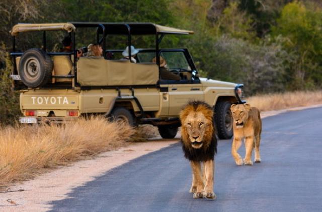 africa photo safari Kruger park33.jpeg