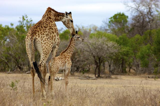 africa photo safari Kruger park32.jpeg