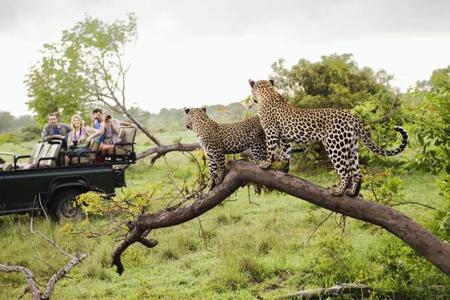 africa photo safari Kruger park31.jpeg