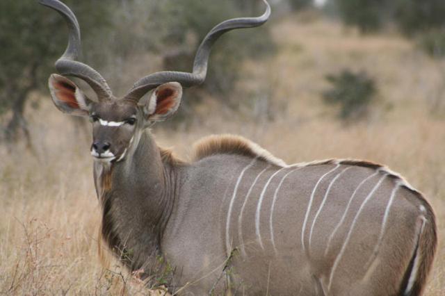 africa photo safari Kruger park25.jpeg