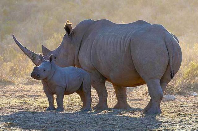 africa photo safari Kruger park24.jpeg