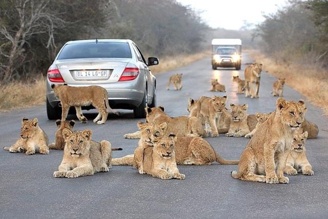 africa photo safari Kruger park23.jpeg