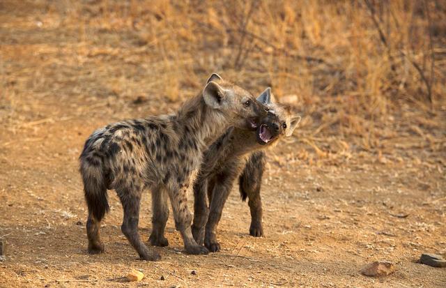 africa photo safari Kruger park21.jpeg